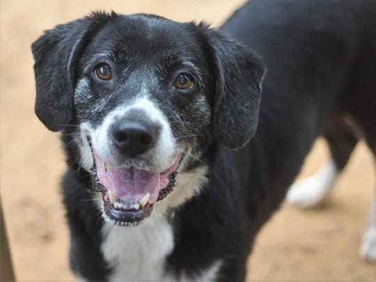 Sukie is a calm, laid back dog that also loves to play.