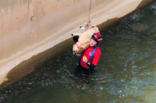 A rescue swimmer carries a dog to safety Friday after the animal got trapped in a canal near Lake Casitas.