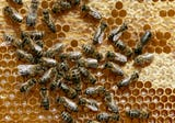 Holy honey! That's a lot of bees! Buzz60's Tony Spitz has the details.
