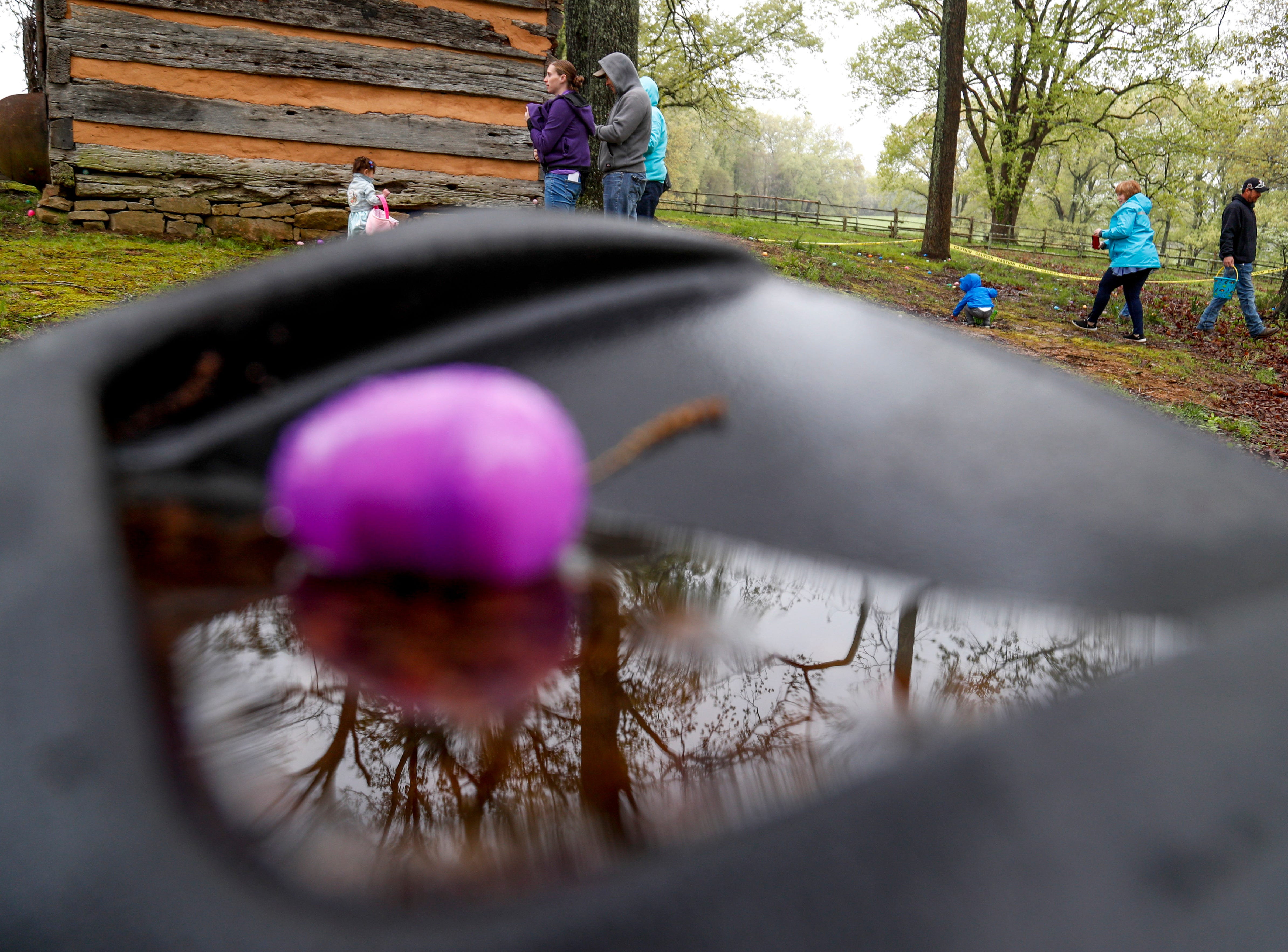 Families search for eggs amongst the trees at the annual Easter egg hunts at Historic Collinsville in Clarksville, Tenn., on Saturday, April 20, 2019.