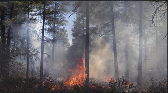 Wildfire sparks in Prescott National Forest