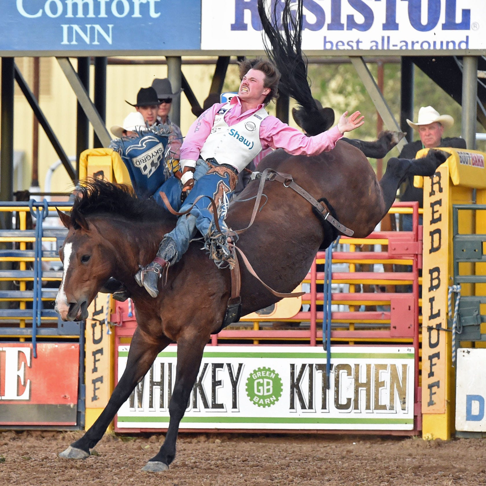 Bareback rider trades hockey for rodeo, leads at Red Bluff Round-Up