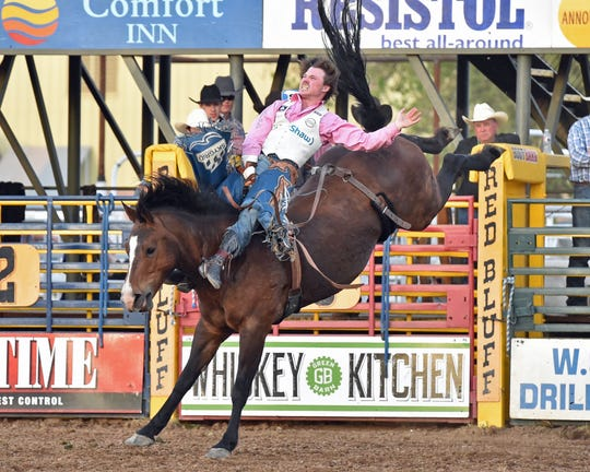 Bareback rider Connor Hamilton leads in his event at the Red Bluff Round-Up after the first performance Friday at the Tehama District Fair grounds. The Calgary, Alberta, cowboy began riding bucking horses five years ago, trading in his hockey stick for a bareback rigging.