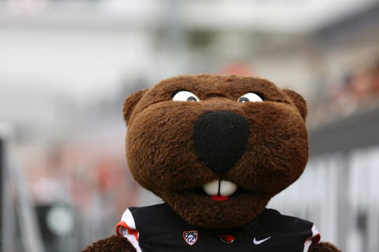 Benny Beaver cheers on his team during Oregon State University's spring football game at Reser Stadium in Corvallis on April 20, 2019.