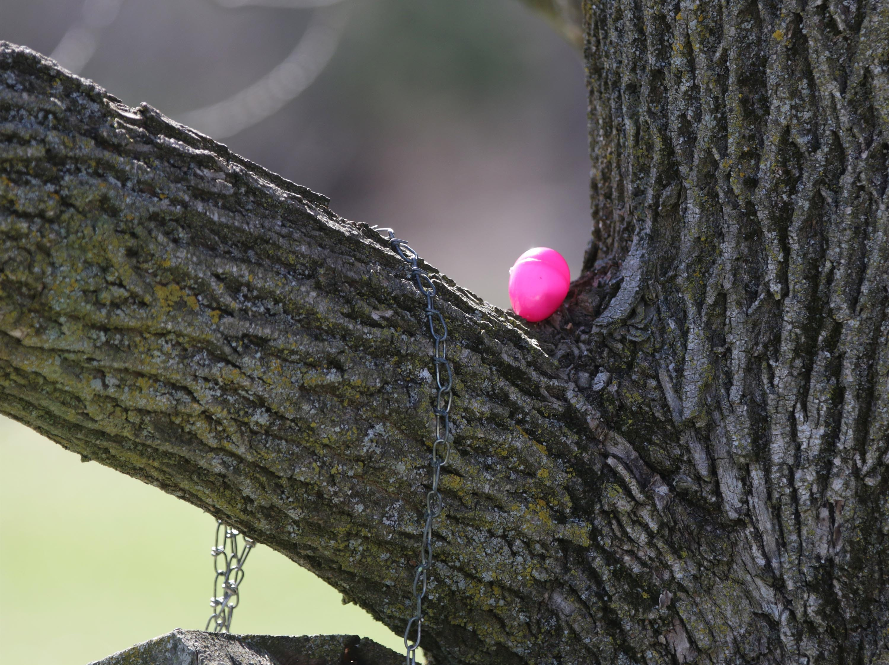 An easter egg in a tree before the Hocevar Easter Egg Hunt, Saturday, April 20, 2019, in Sheboygan Falls, Wis.  This years marks 25 years for the Hocevar Family holding an Easter egg hunt at their home, according to Kathy Hocevar.