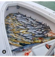 According to some charter boat captains in the Florida Keys, scenes like this have been too common and are resulting in a decline in blackfin tuna (right side) catches.