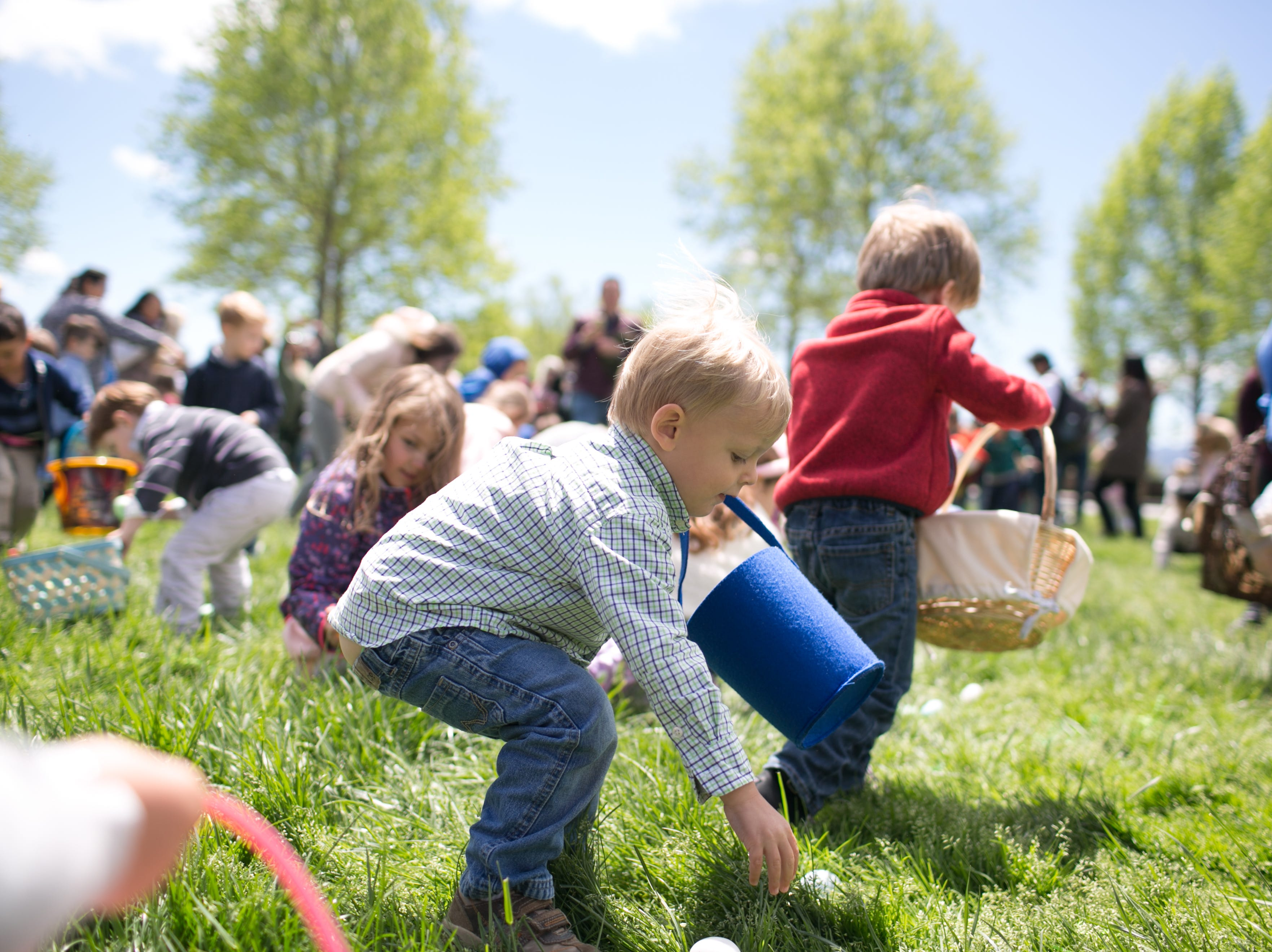 Carson Alt, 3, of Waynesville, searches for eggs during the Biltmore Estate's Easter egg hunt on April 21, 2019. Biltmore's hunt is one of the Southeast's largest, with hundreds of children ages 2–9.