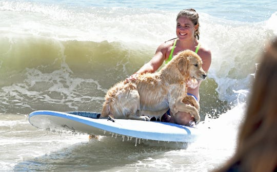 Lisa Malick with Misty, who was learning to surf. The Brevard Humane Society East Coast Dog Surfing Competition was held Easter Sunday, April 21, at Lori Wilson Park, part of the Cocoa Beach Easter Surf Contest. Sunday also included surf lessons for dogs.