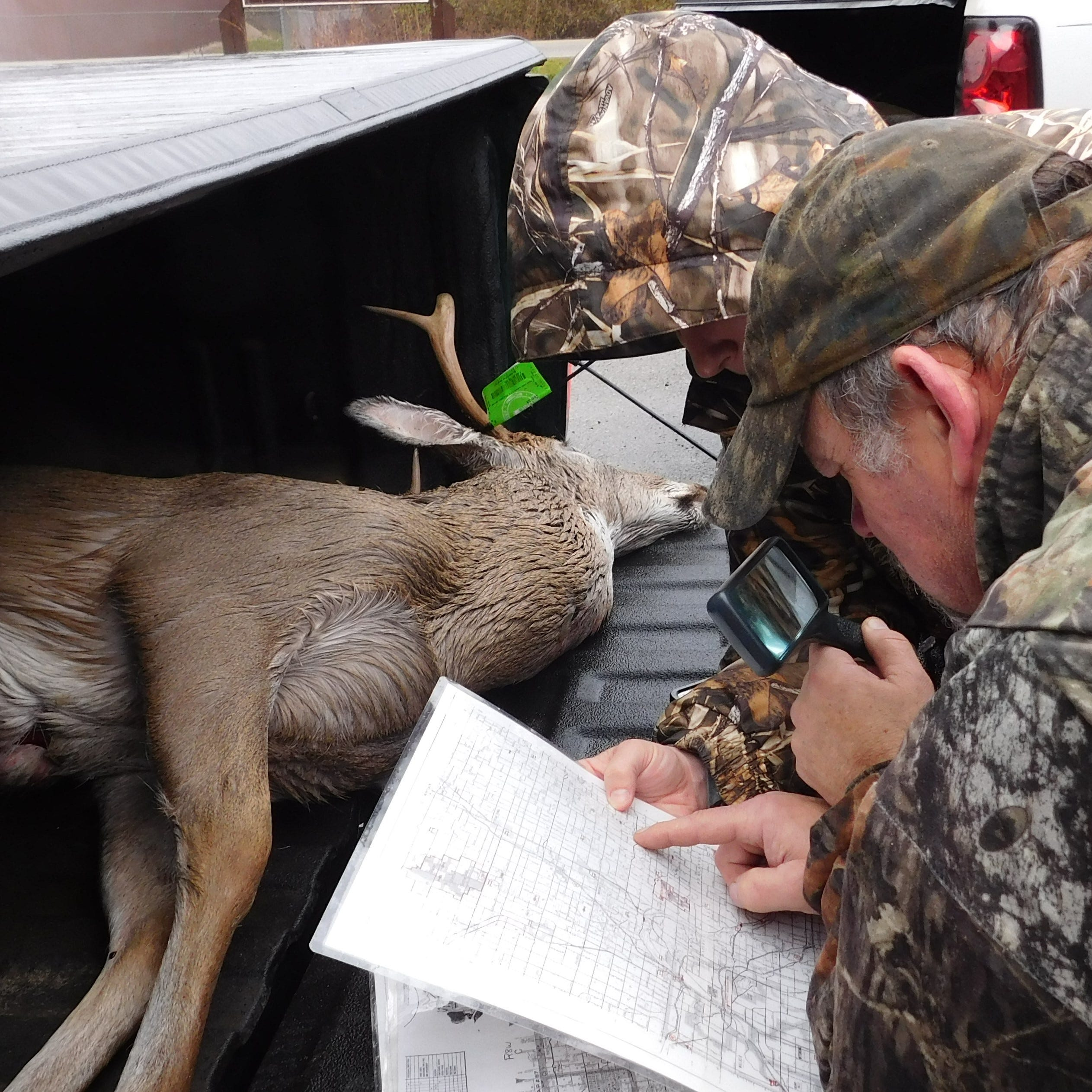 New DNR grants target deer disease — before disease targets us