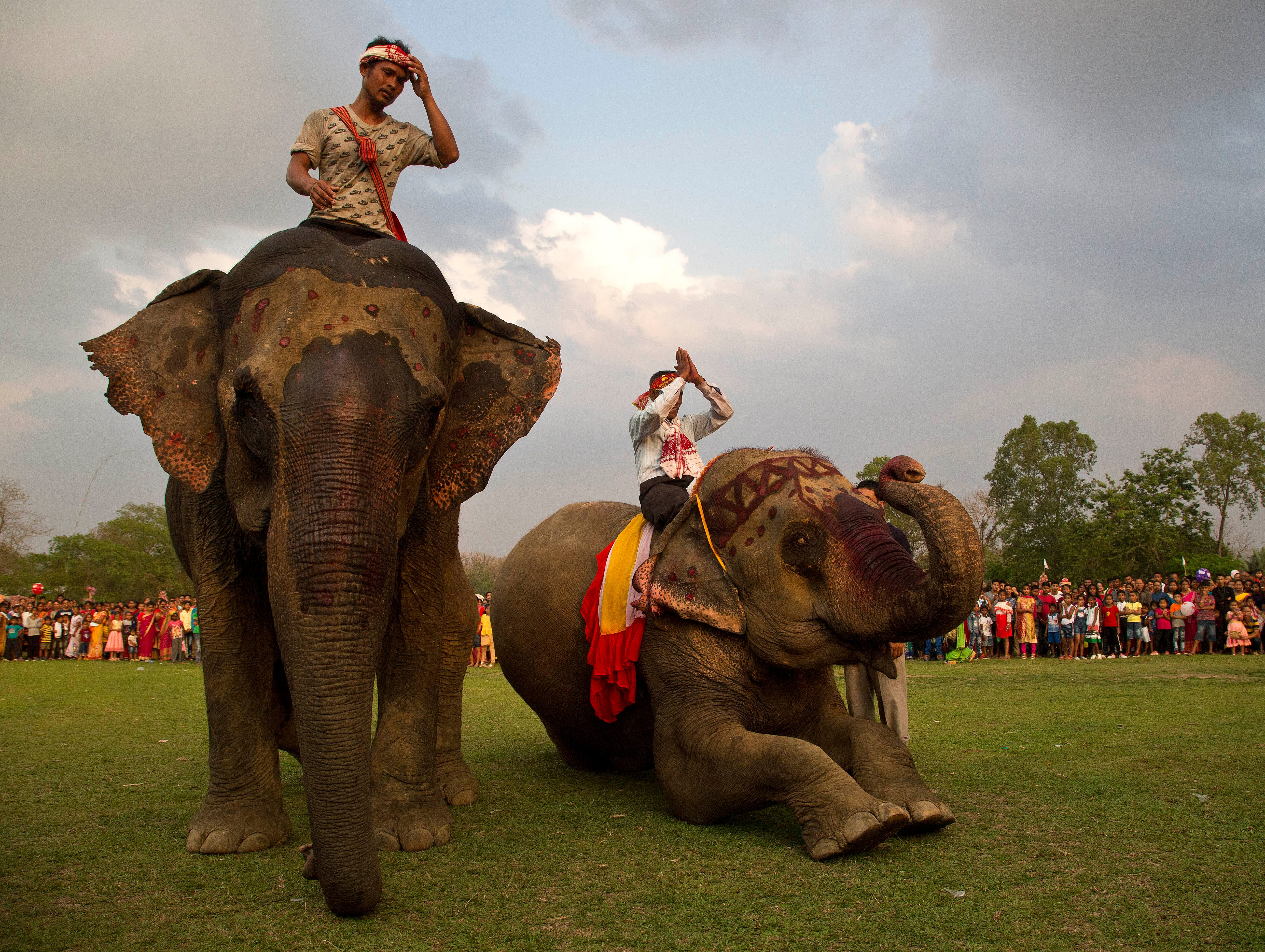 Mahouts and elephants salute villagers after a traditional elephant fight during the Suwori Tribal festival in Boko, west of Gauhati, India, Saturday, April 20, 2019. Traditional elephant fights, elephant races, horse races, tug of war and dances mark this festival which coincides with the Assamese Rongali Bihu, or the harvest festival of the northeastern Indian state of Assam.