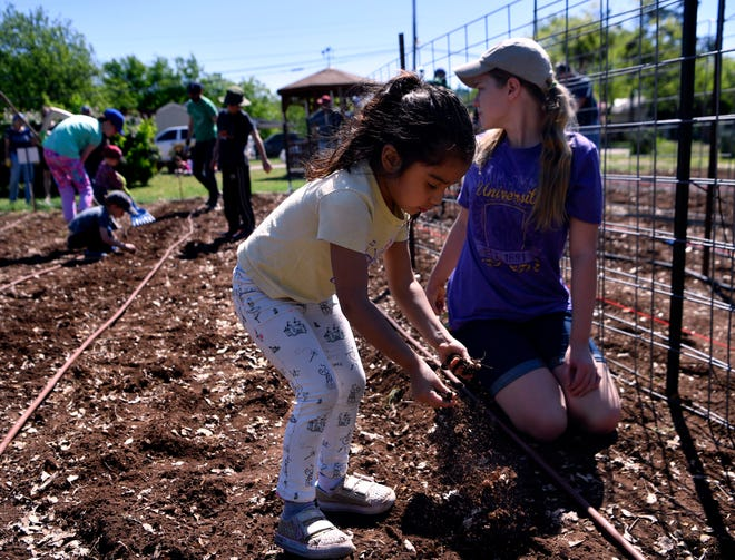 Natalie Feltz, 4, drops soil into a row, covering the black-eyed peas she dropped there with Mya Rogers, 12, on Saturday. The two were helping in the planting of the Open Door Community Garden, which is sponsored by Aldersgate United Methodist Church.