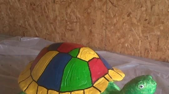 Brown County Sheriff's Department hopes community will shell out tips for missing turtles