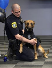 Pyro, a police dog who is recovering from stab wounds, sits with Green Bay police officer Scott Salzmann during a press conference Monday at the Green Bay Police Department.