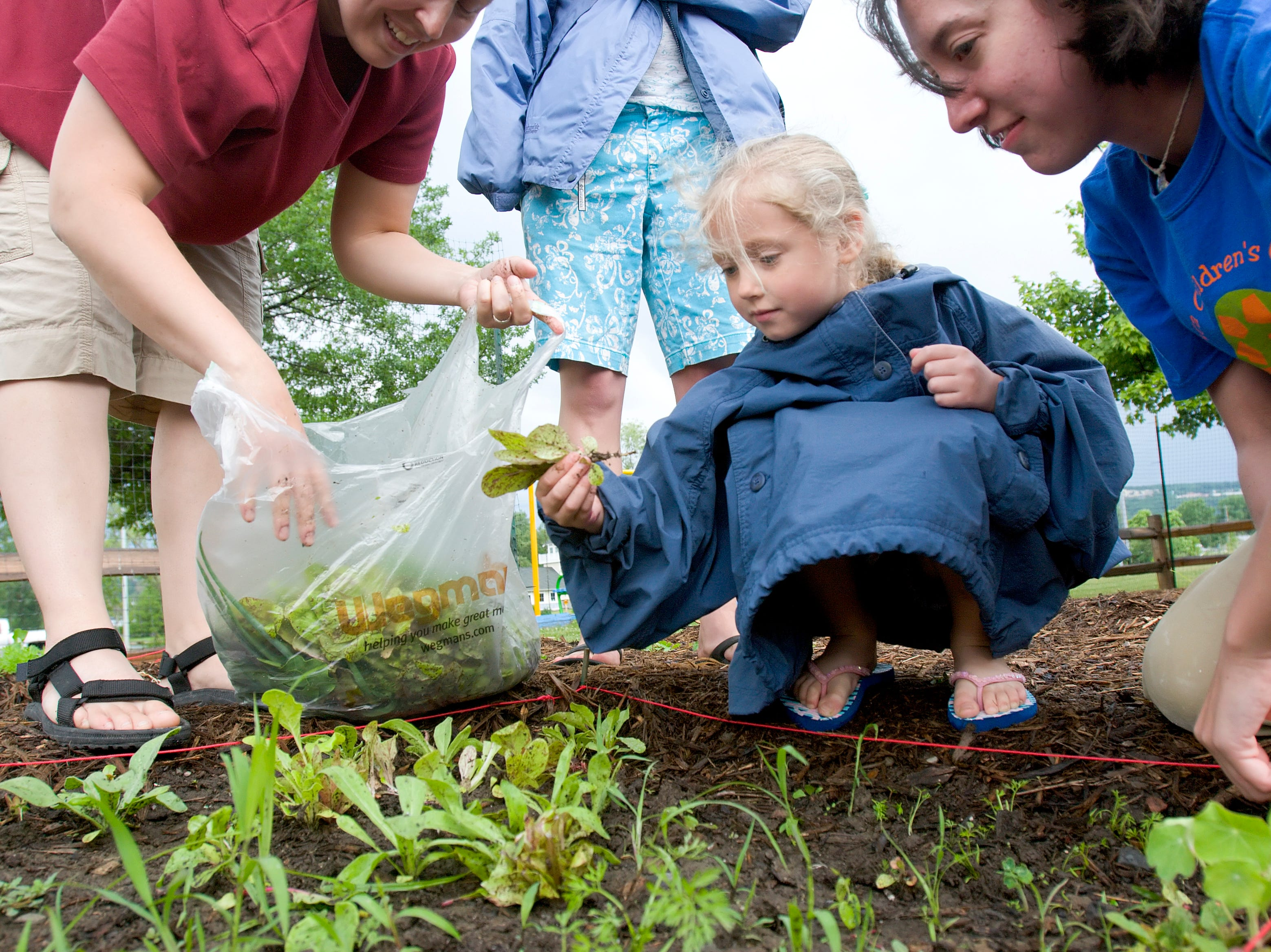 2008: Leah Wardlaw, center, picks salad vetegatables with her mother Dana, left, and her instructor Leigh Kalbacker at the Ithaca Children's Garden on Monday afternoon. Participants picked greens, washed them, and then had a sald eating party.