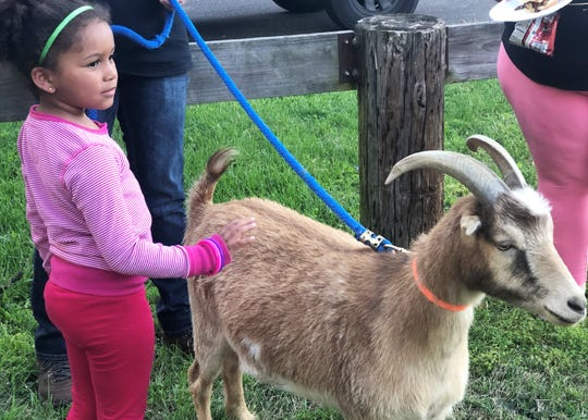 Avery Smith, 6, meets a goat from Hooves and Feathers at Halls Outdoor Classroom spring event on April 16, 2019.