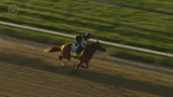 By My Standards, a horse running in the 2019 Kentucky Derby, took some time Monday to run on the Churchill Downs dirt. April 22, 2019