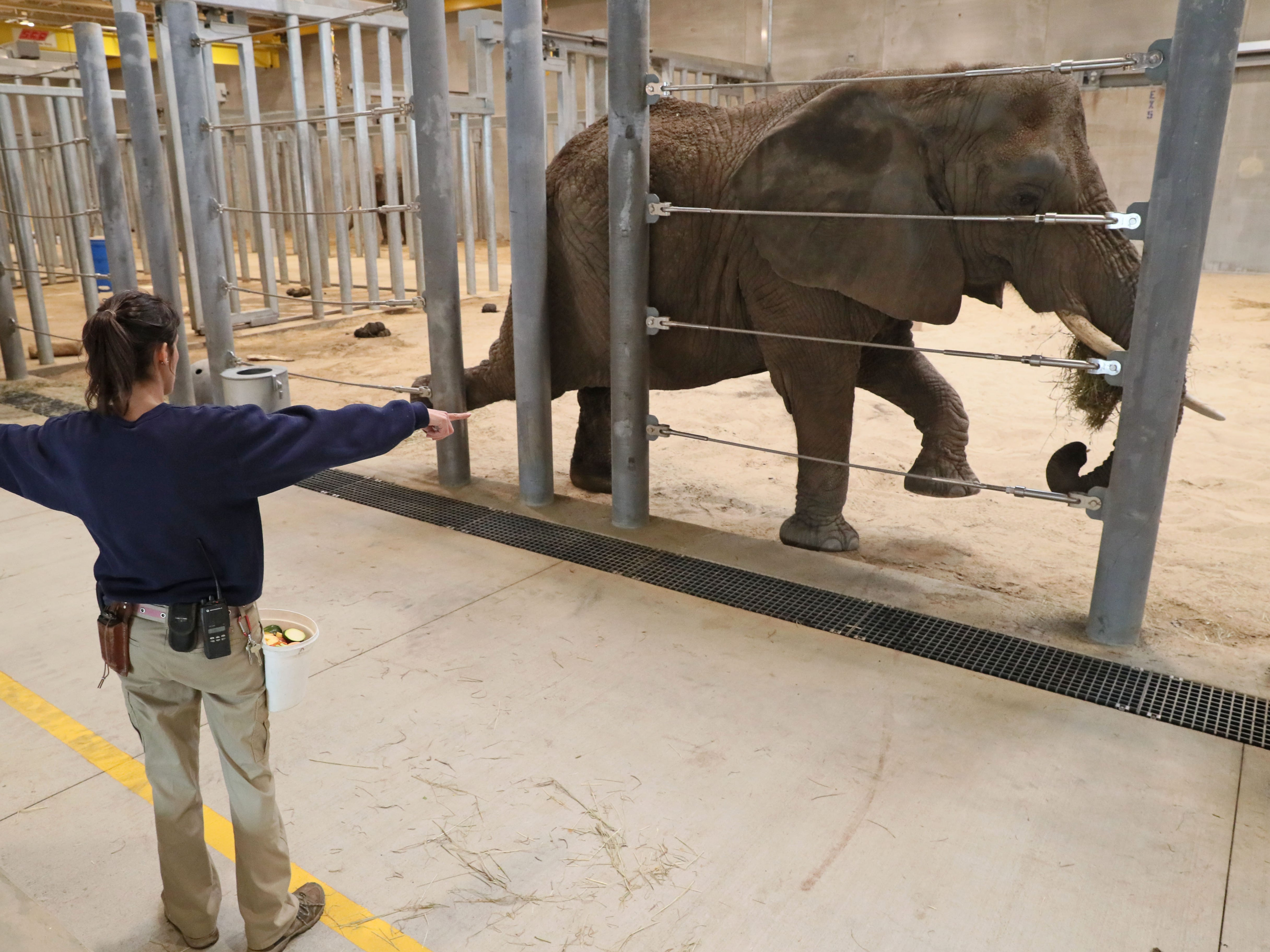 Elephant care coordinator Erin Dowgwillo puts Ruth through her exercises.