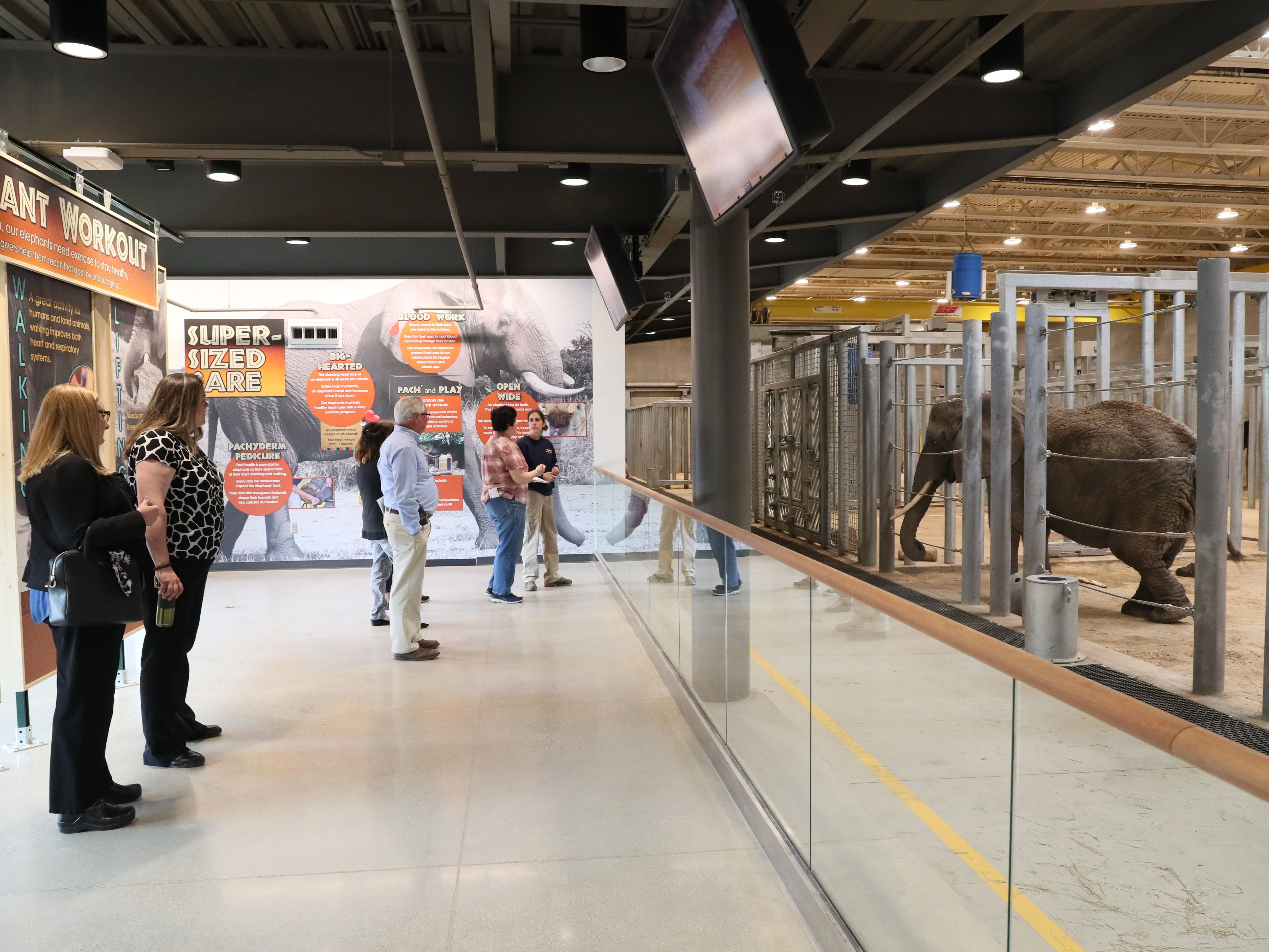 In the elephant care center, visitors can watch the elephants being cared for and doing their workouts with the zoo staff.