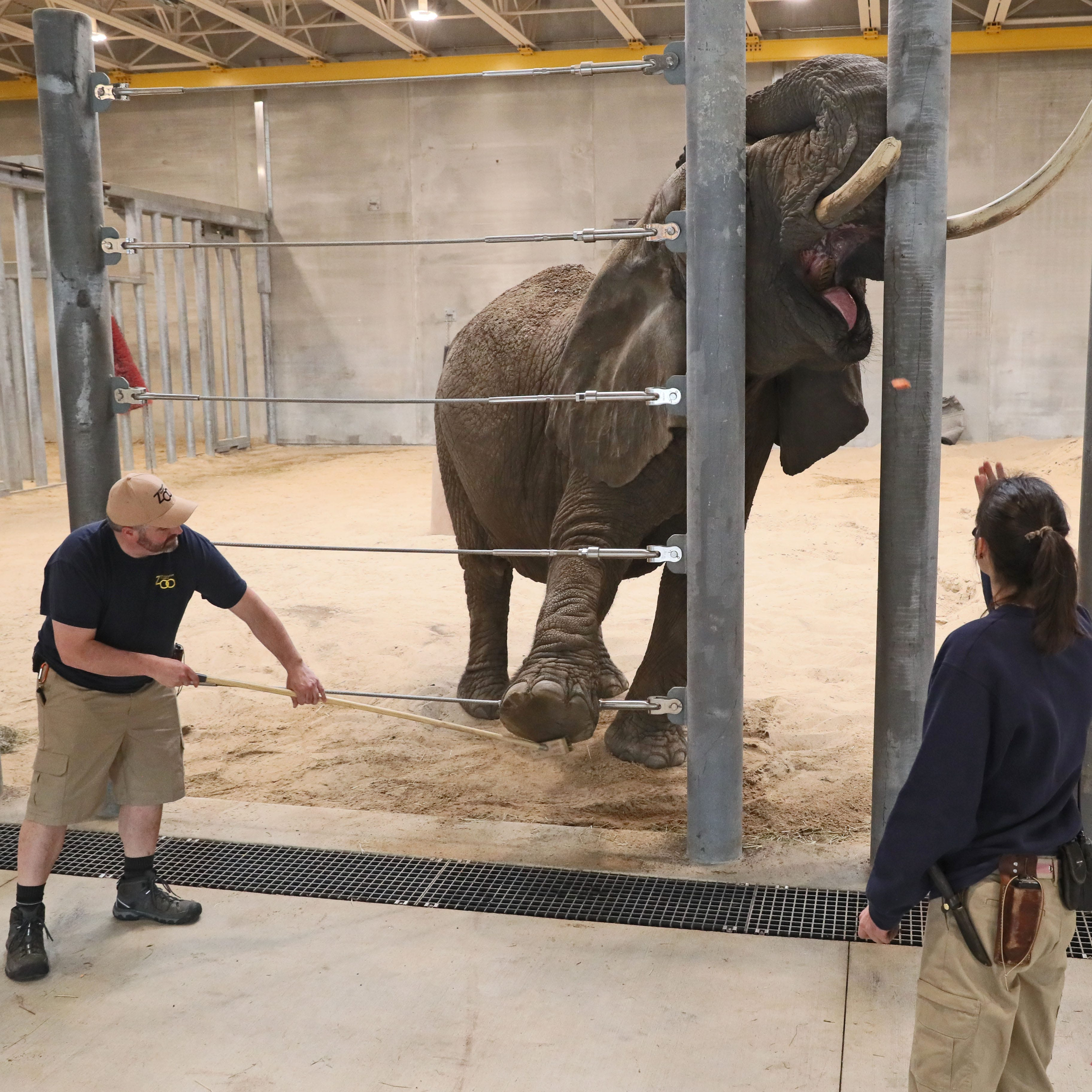 Milwaukee County Zoo's elephants pack trunks and move into their new home