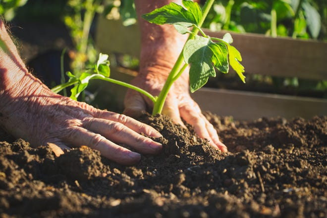 The People/Plant Connection is sponsoring two gardening seminars in September.