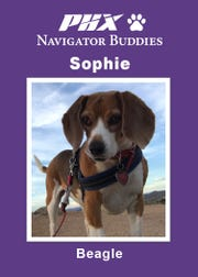 Sophie's navigator buddy card. Sophie is one of 59 therapy dogs that volunteer at Phoenix Sky Harbor International Airport.