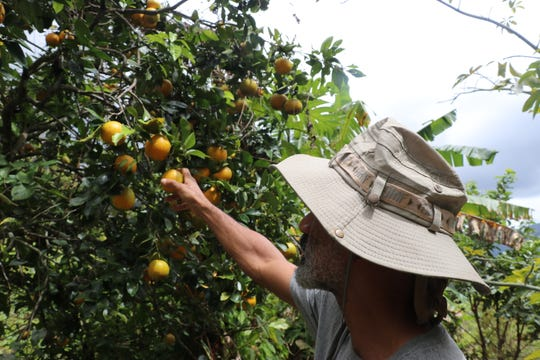 Paul Ratliff prefers working in an orchard to cubicle life.