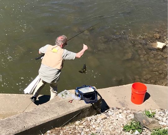 Chip Dykes pulls a fish from the Codorus Creek on Sunday, April 21 2019.