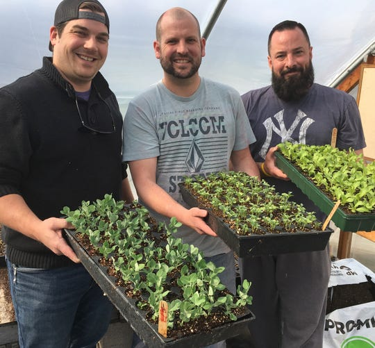 Sprout of Hope organizers (from left) Zachary Routson, Ryan Beard and Rob Olszewski hold trays of seedling that will be transplanted to garden plots.