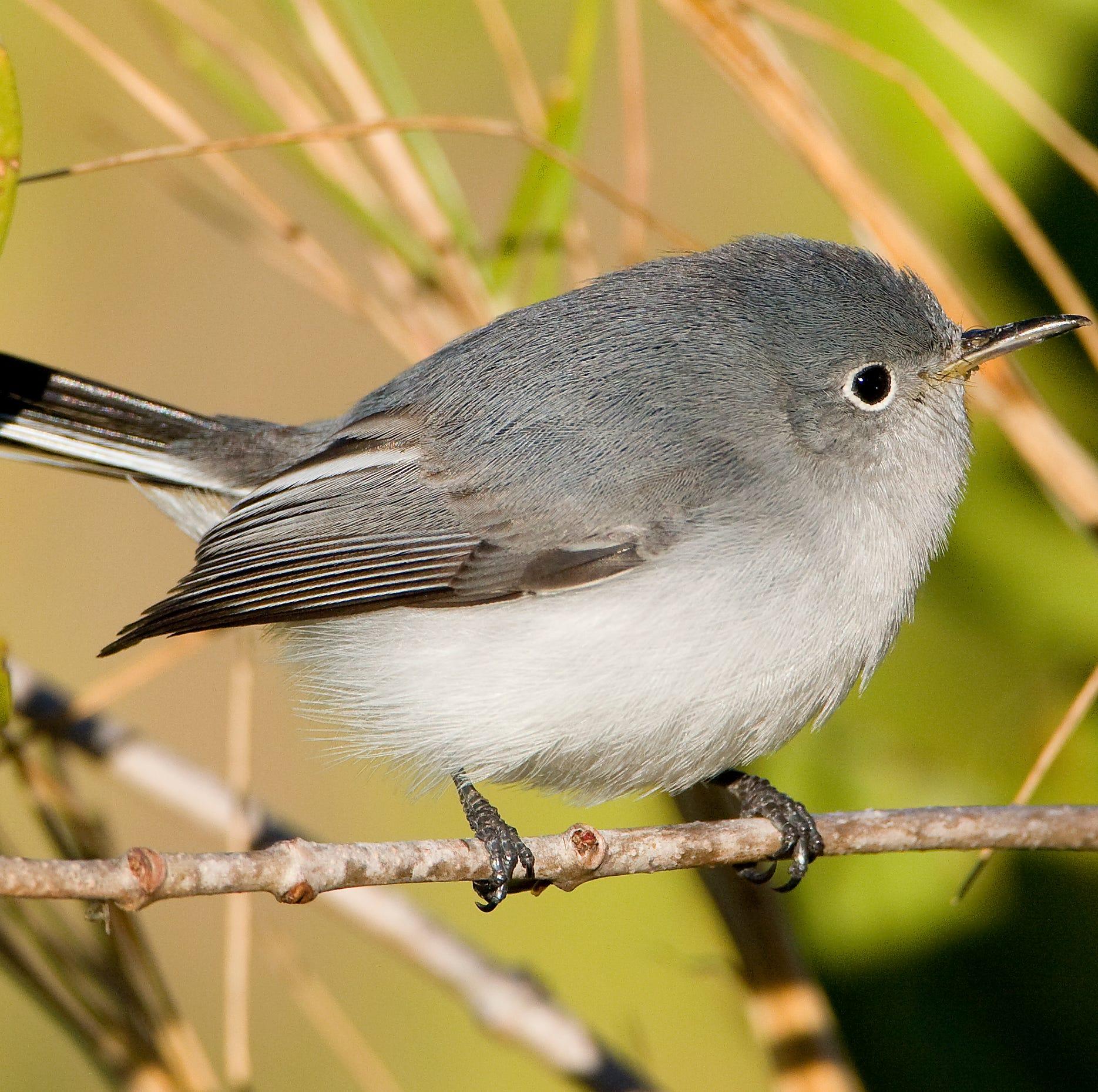 Bird words: California's chaparral brushlands home to dozens of bird species