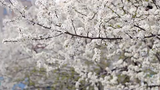 Spring in NYC is here. Here are some free things you can do in the city. Buzz60's Natasha Abellard has the story.