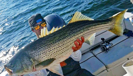 About those striped bass options: 'They all stink'