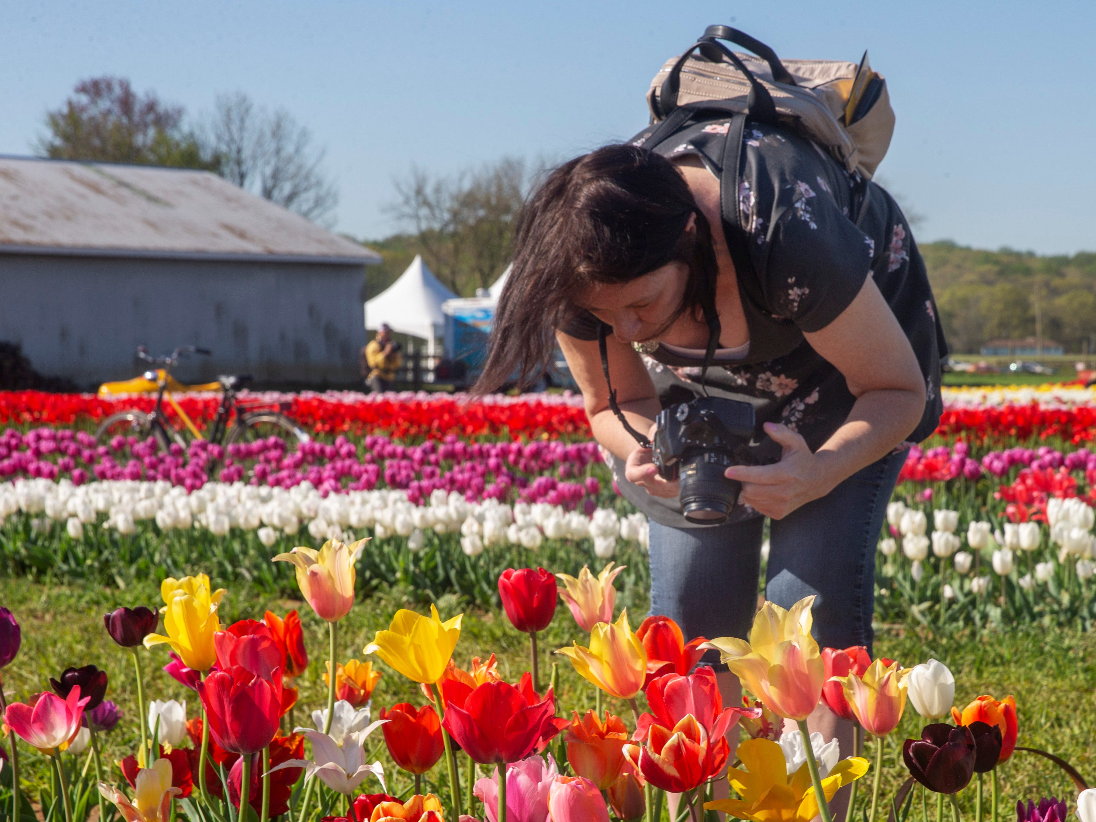 Vicky Mcerlean of Manahawkin photographs the tulips during visit to the annual Tulip Festival at Holland Ridge Farms in Cream Ridge Section of Upper Freehold Township. People came from all around to look at the flowers, take pictures of the flowers, and take pictures of themselves with the flowers.