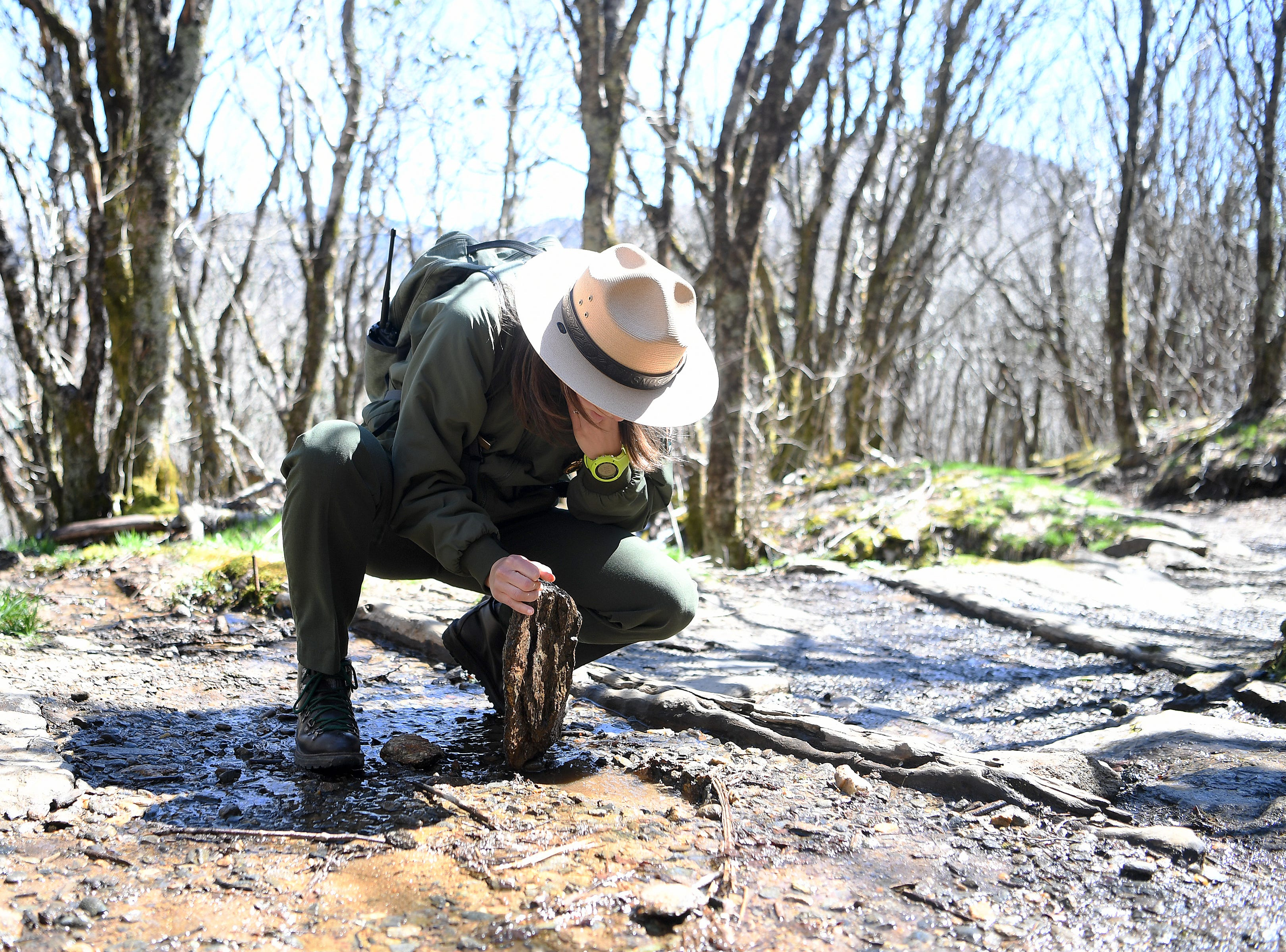 Blue Ridge Parkway spokesperson Caitlin Worth looks for a salamander or other critter under a rock on the Craggy Pinnacle Trail on the Blue Ridge Parkway after explaining the Craggy Rovers program on April 22, 2019. The program is run by volunteers that help answer questions for visitors and keep them on the trails to preserve the fragile and rare vegetation that grows in the area.