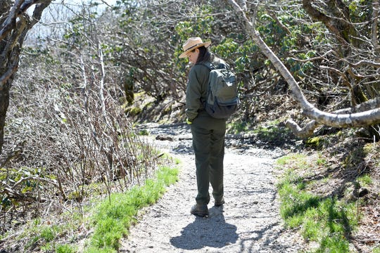 Blue Ridge Parkway spokesperson Caitlin Worth looks for wildflowers along the Craggy Pinnacle Trail on the Blue Ridge Parkway after explaining the Craggy Rovers program on April 22, 2019. The program is run by volunteers that help answer questions for visitors and keep them on the trails to preserve the fragile and rare vegetation that grows in the area.