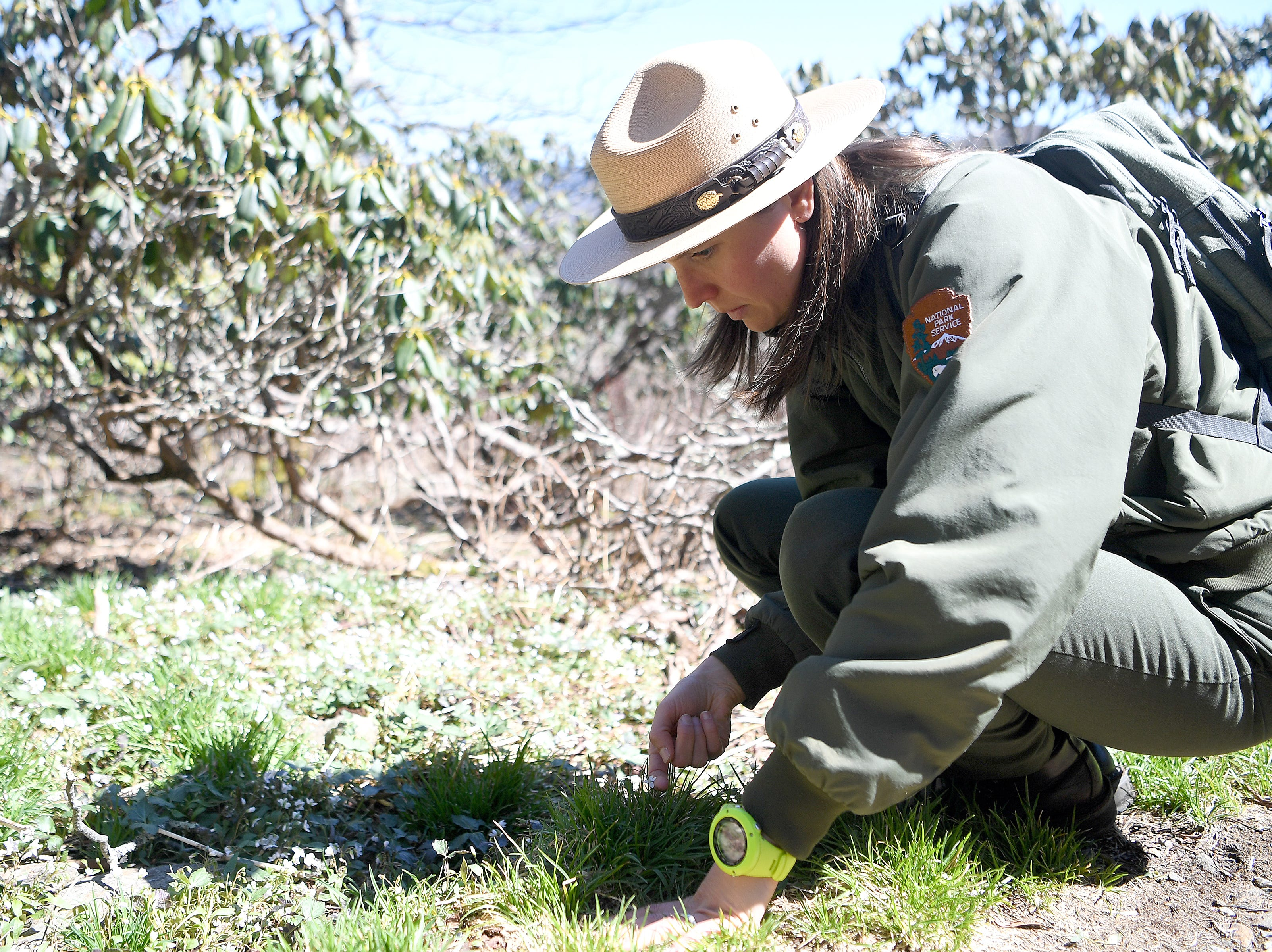 Blue Ridge Parkway spokesperson Caitlin Worth identifies wildflowers along the Craggy Pinnacle Trail on the Blue Ridge Parkway after explaining the Craggy Rovers program on April 22, 2019. The program is run by volunteers that help answer questions for visitors and keep them on the trails to preserve the fragile and rare vegetation that grows in the area.