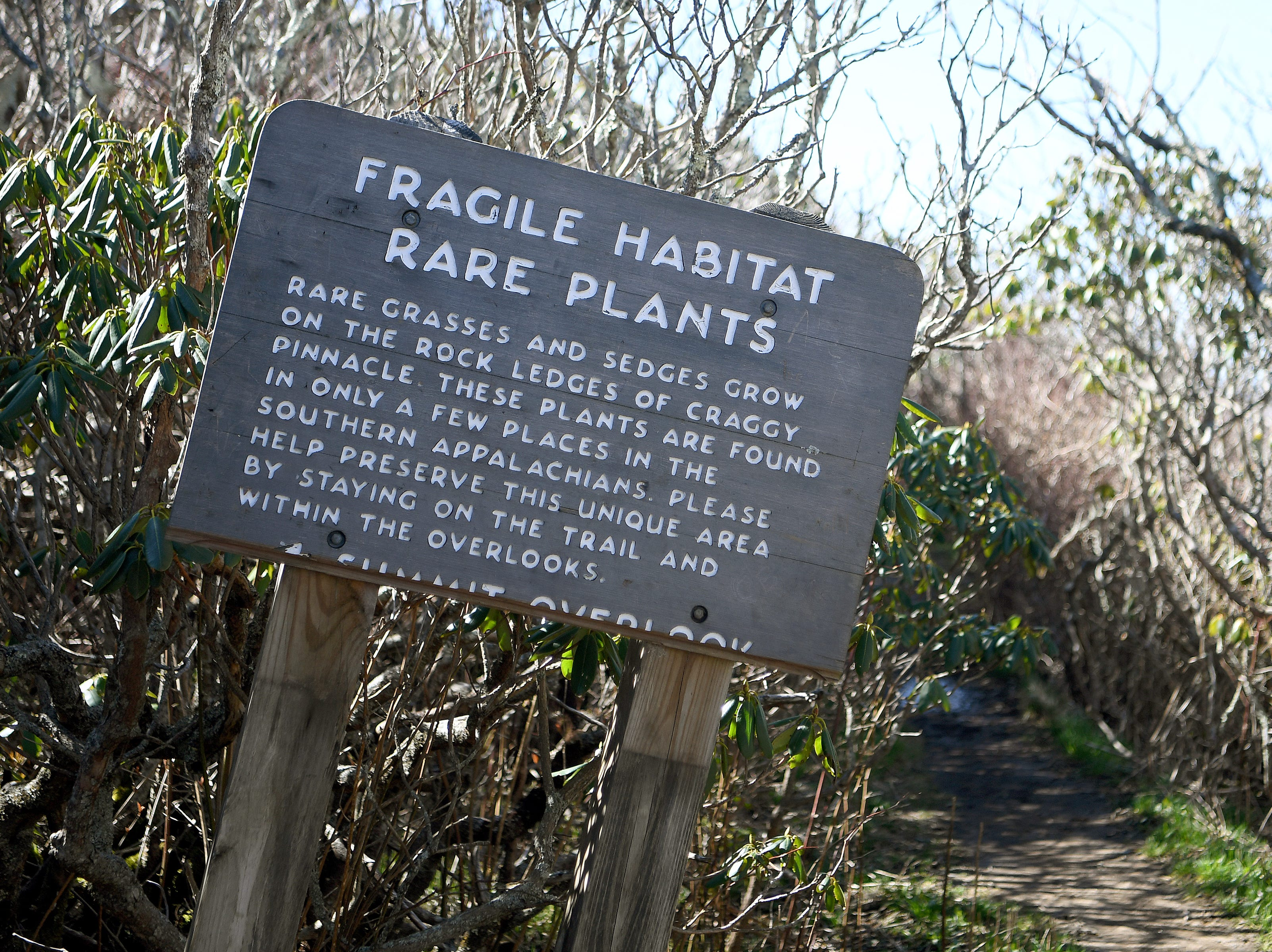A sign on the Craggy Pinnacle trail on the Blue Ridge Parkway warns visitors of fragile plant life and to stay on the trails to preserve it.