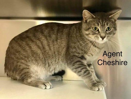 Agent Cheshire
