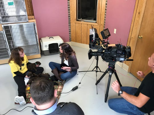 'Inside Edition' crews interview Karen Rau, executive director of Marshfield Area Pet Shelter. The program will feature on Wednesday the story of the nine puppies rescued from a Marshfield garbage can.