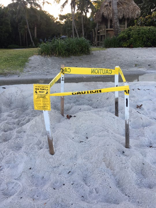 This loggerhead sea turtle nest was found on Monday, April 22, 2019, toward the southern end of Naples beach, said Maura Kraus, principal environmental specialist for Collier County. It is the earliest sea turtle nest found on Naples beaches in 23 years.