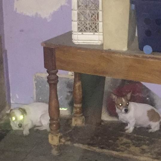 Photos show dogs living in dilapidated Coachella home of suspected puppy dumper