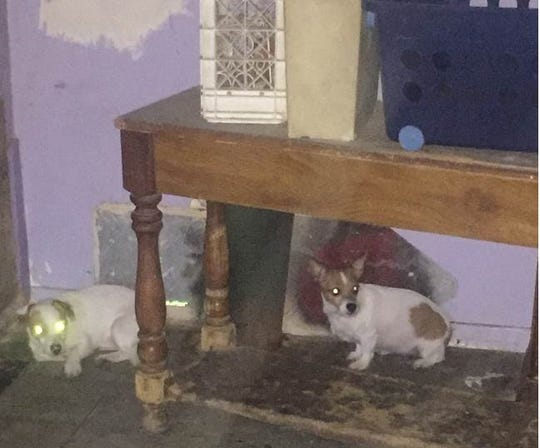This photo shows two dog at the home of a Coachella woman accused of abandoning seven puppies in a dumpster outside a Coachella business on Thursday, April 18, 2019.