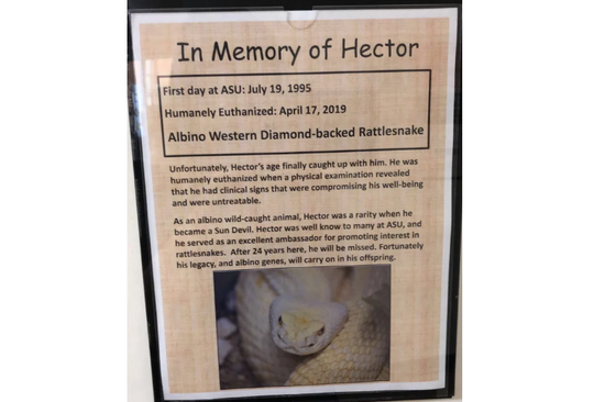 Hector, the Western diamondback rattlesnake, was euthanized in April 2019.