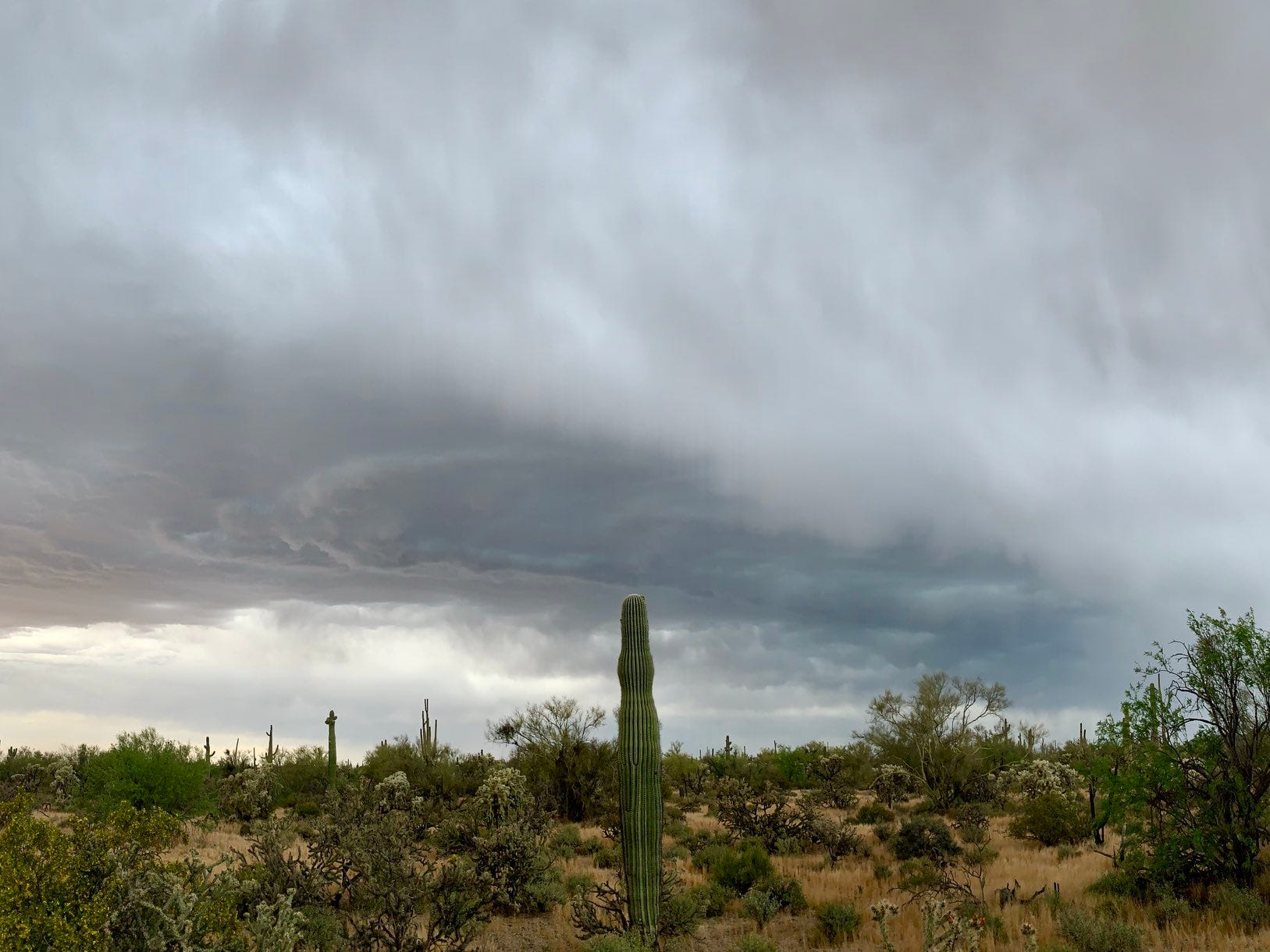 A cactus seems to point to the menacing storm clouds above in this image captured by National Weather Service Skywarn Spotter Lori Grace Bailey south of Florence on Tuesday, April 23, 2019.