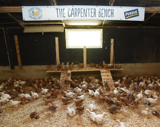"""""""The Carpenter Bench"""" with the winner of a recent Perdue Farms Inc. contest to improve animal welfare. The bench helps better socialize the chickens and maximize space in a chickenhouse."""