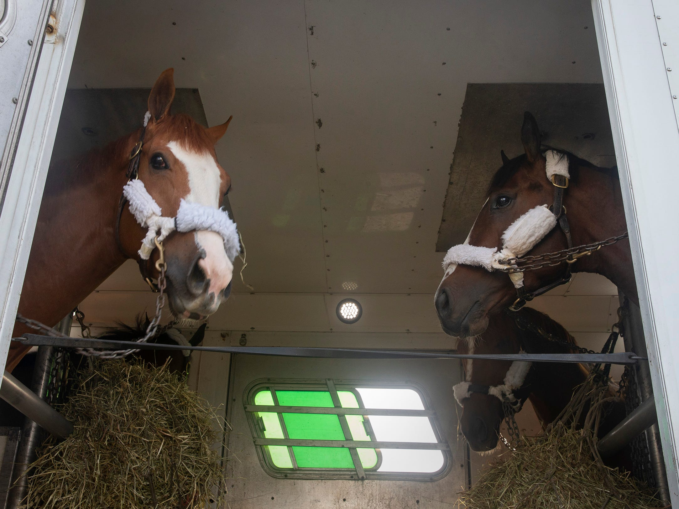 Horses eat and wait patiently to be unloaded in one of several trailers arriving Monday with the horses of trainer Chad Brown. Monmouth Park backstretch comes to life as trainers and horses arrive in preperation for the May 4 opening day.