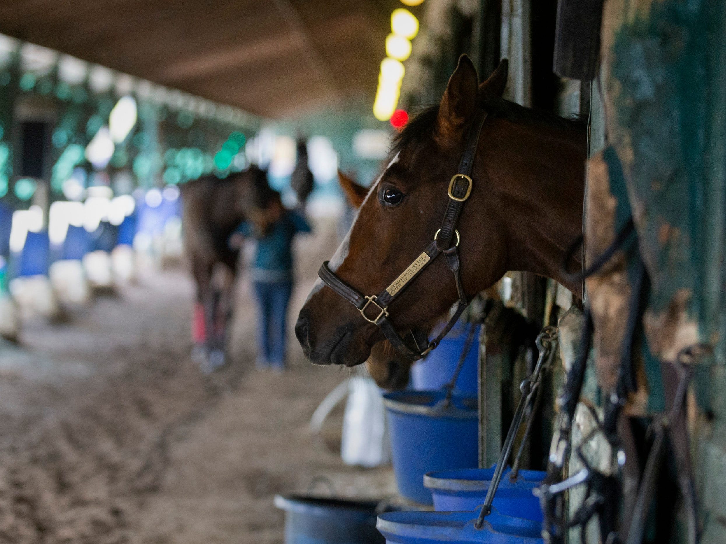 Horses are walked in fed in stalbe of Chuck Spina. Monmouth Park backstretch comes to life as trainers and horses arrive in preperation for the May 4 opening day.