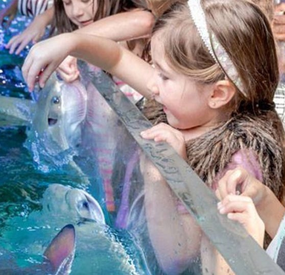 Controversial SeaQuest Aquarium to open at Woodbridge Center