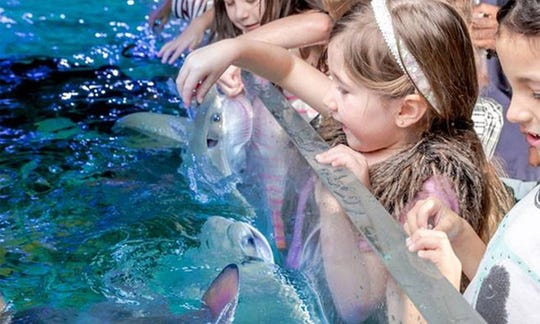 """Central Jersey animal activists will continue to protest the forthcoming SeaQuest Aquarium at Woodbridge Center on Sunday, according to media reports. Eight of them gathered on Aug. 11 with signs that read: """"Captivity kills."""" The protests are in the wake of PETA urging the state to deny permits because of charges of animal cruelty against SeaQuest locations in other states."""