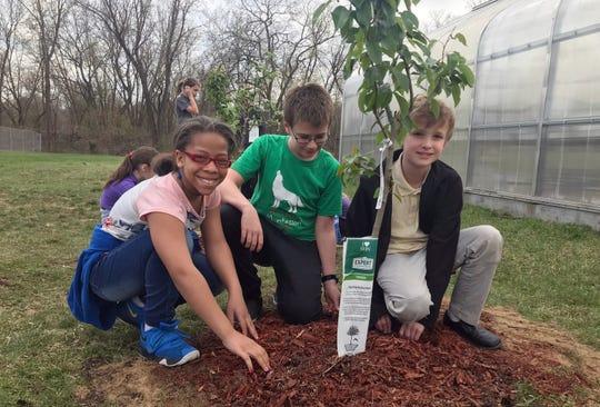 Morgan Jackson, 10, left, Josh Ryckman,11, center, and Mitchell Cooper, 10, help plant fruit tree saplings at the Battle Creek Montessori Academy in Springfield, Mich.
