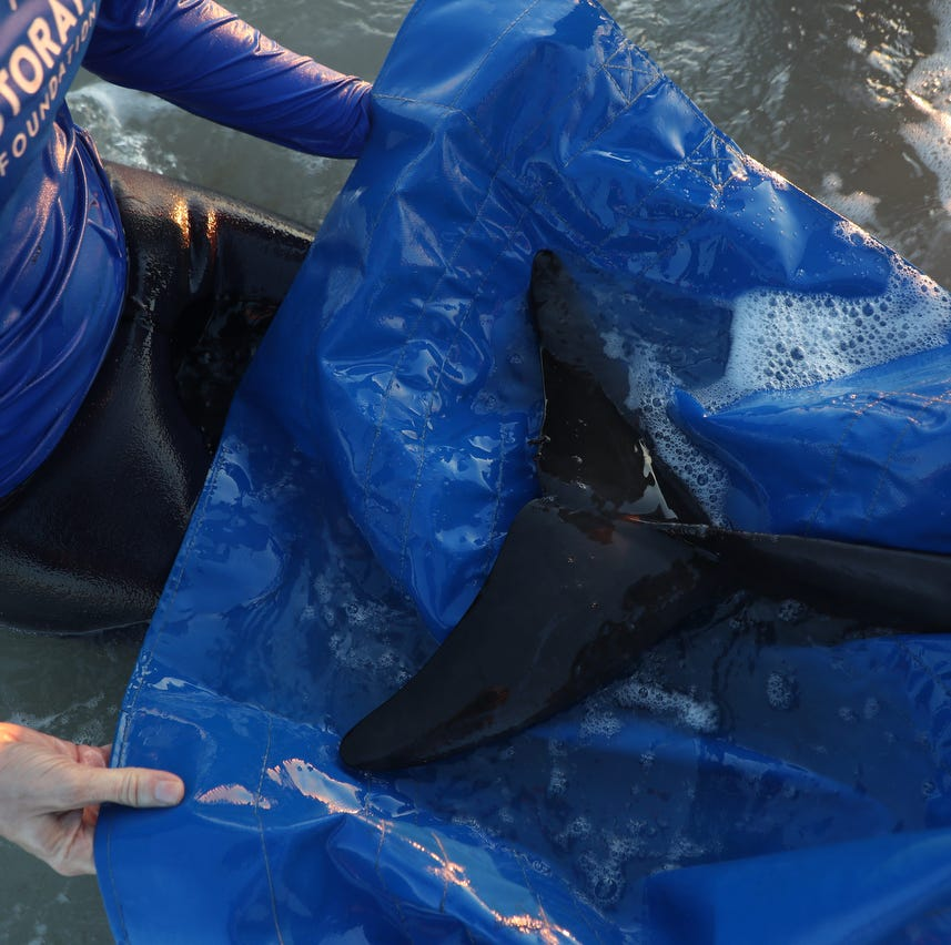 Five things to know about rough-toothed dolphins